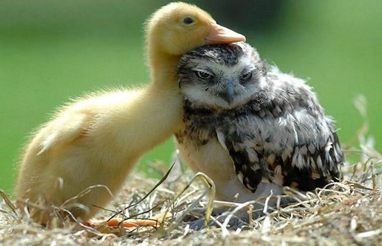 Animal lovers across species show of affection (32)