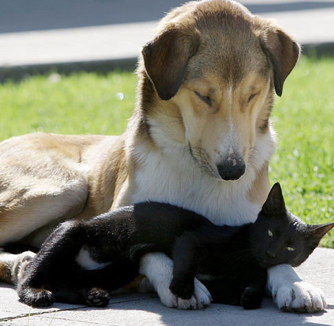 Animal lovers across species show of affection (34)