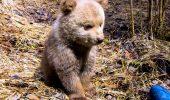Boogster a fost dus la orfelinatul pentru urşi din Harghita