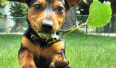 Poţi să-ţi tratezi câinele cu plante medicinale! Află cum!