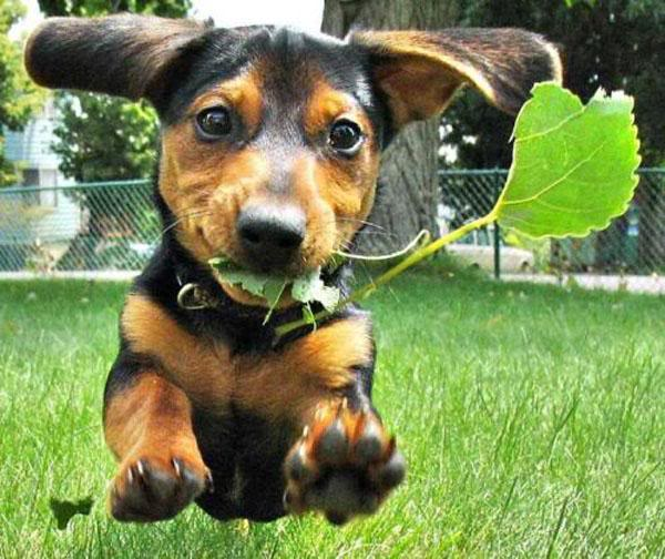 Dog-herbal-medicine