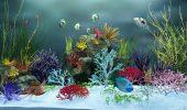 Pot peştii să trăiască într-un acvariu fără încălzitor de apă?