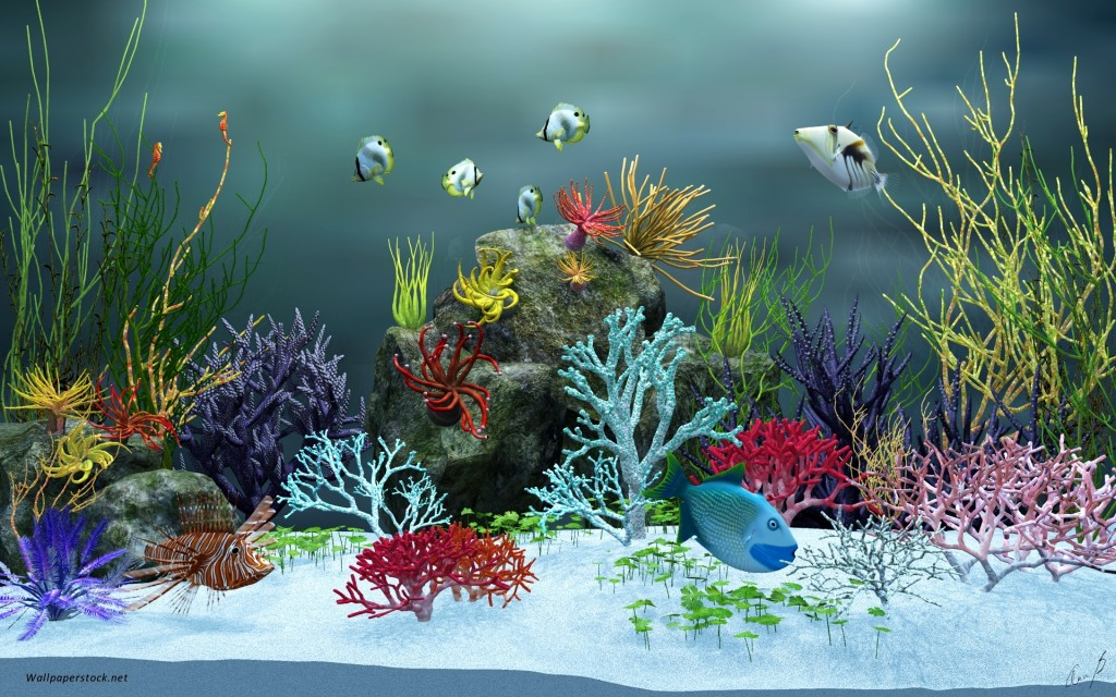 Fish-Tank-Background-Pictures-Fish-Tank-View-1024x640