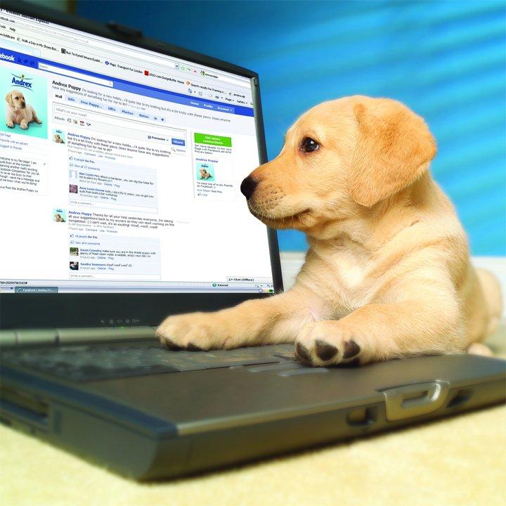 Puppy-on-Facebook
