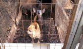 Realitatea din fabricile de câini şi pisici! Afacerea care naşte monştri