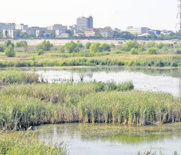 Delta din Bucureşti, o minune în centrul unui oraş poluat