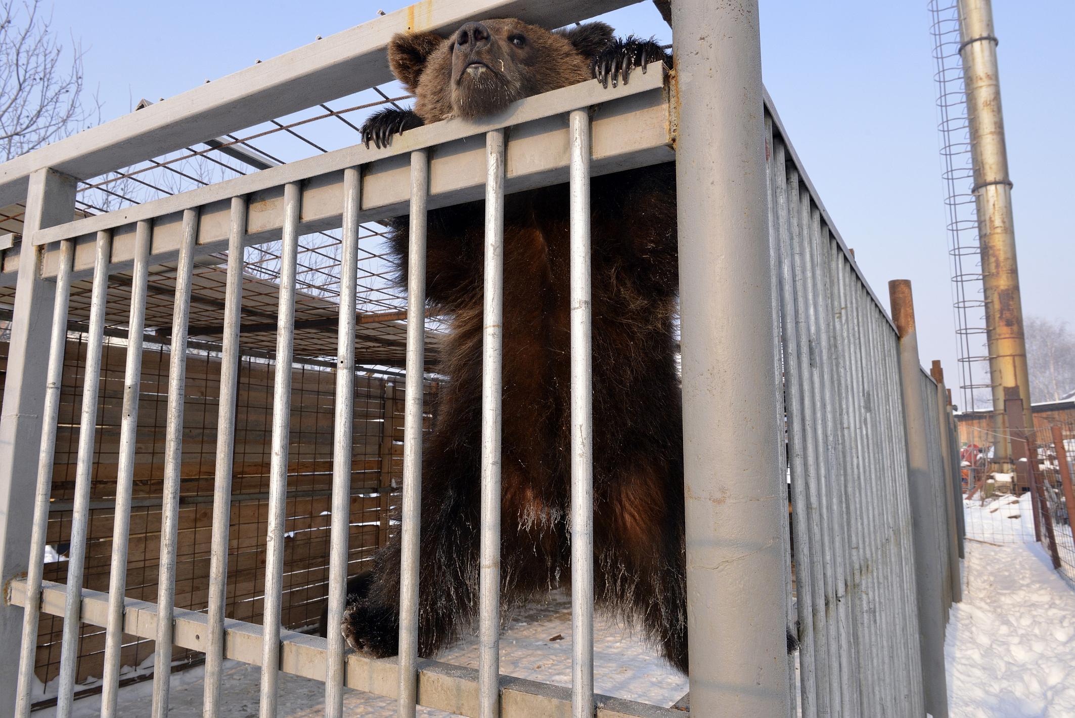 Kosovo Bears at Bamex Hipermarket 2012