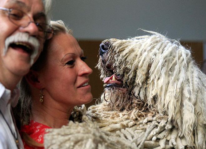 World dog show in Budapest