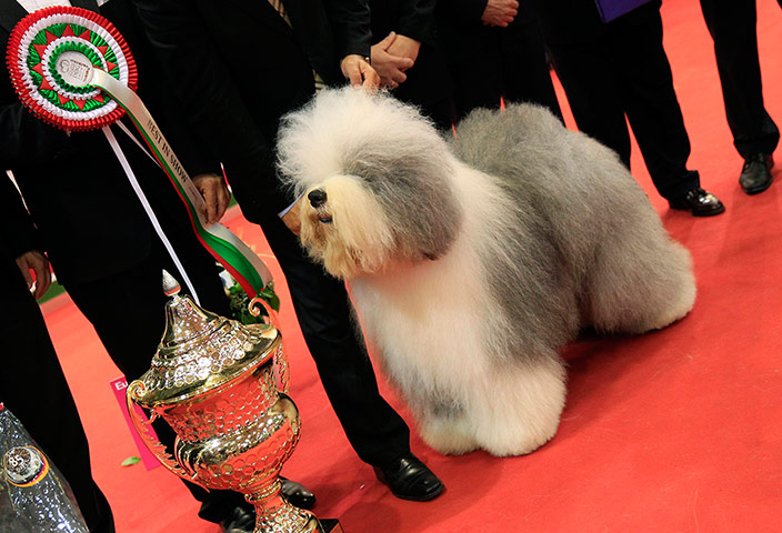 World dog show in Budapest