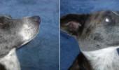 Botox pentru pleoape cazute - Inainte si dupa