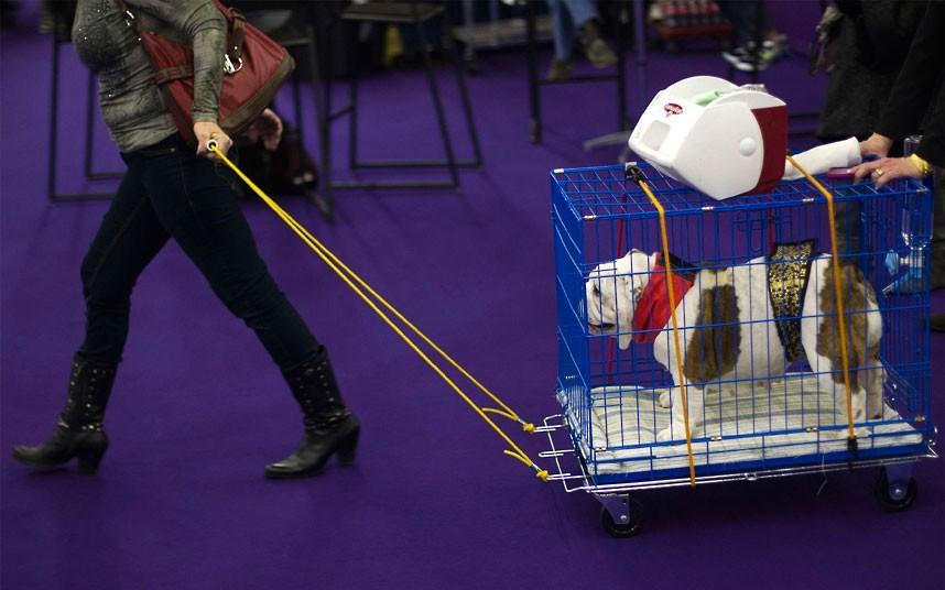 bulldog-cart_2478572k