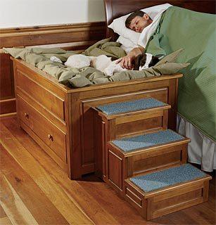 designer-dog-bed