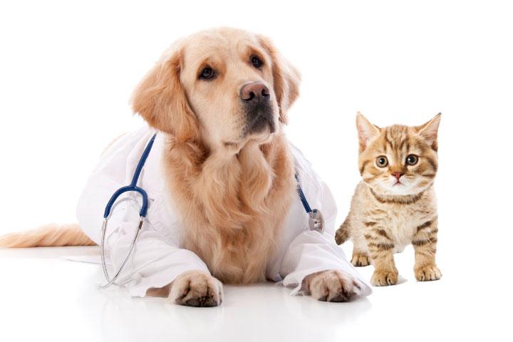 doctor-Dog-cat