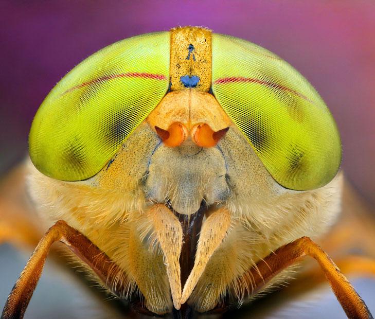dragonfly-smile_2508298k