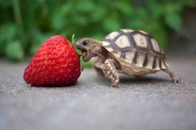 feeding-baby-turtles