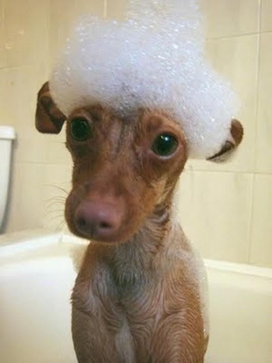 funny-animals-taking-baths-025