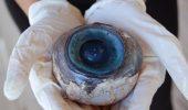 Care este animalul cu cel mai mare ochi din lume!