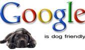 Vrei să te angajezi la Google? Atunci trebuie să iubeşti câinii! Acest lucru e specificat în contract!