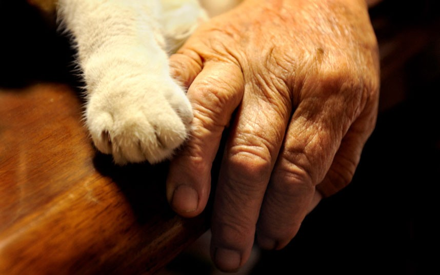 hand-and-paw_2407646k