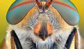 Macro fotografii! Insectele vazute de aproape sunt chiar simpatice!