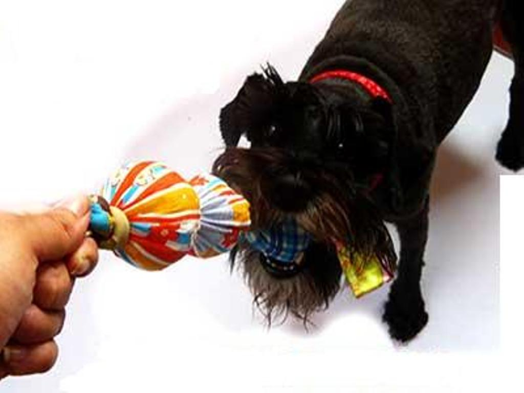 how-to-make-dog-toys