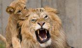 TOP 10 lucruri UIMITOARE pe care NU le stiai despre animale | GALERIE FOTO
