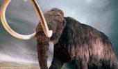 ANIMALELE PREISTORICE ar putea fi curând CLONATE. Sângele unui MAMUT prins în gheaţă în urmă cu 15.000 ani este lichid