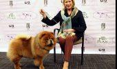 Martha Stewart are 4 câini și 7 pisici