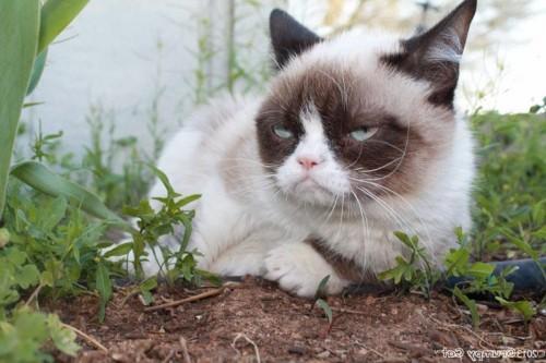 Supărăcioșii! Uite cine NU se bucură de primăvară!