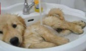 r-ANIMALS-TAKING-A-BATH-large570