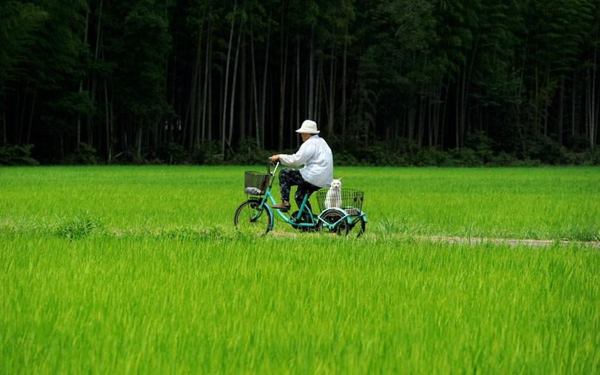 rice-bicycle_2407633k