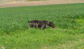 Vezi cu ochii tai câinele hermafrodit si afla povestea catelusei cu 9 vieti!