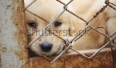 stock-photo-lonely-dog-in-cage-104114993