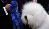swagger-sheepdog_2478579k
