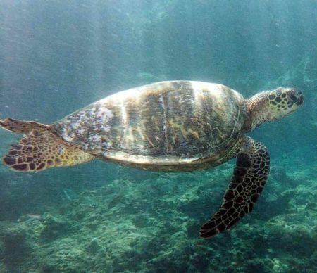 Ce au descoperit oamenii de ştiinţă despre ţestoase