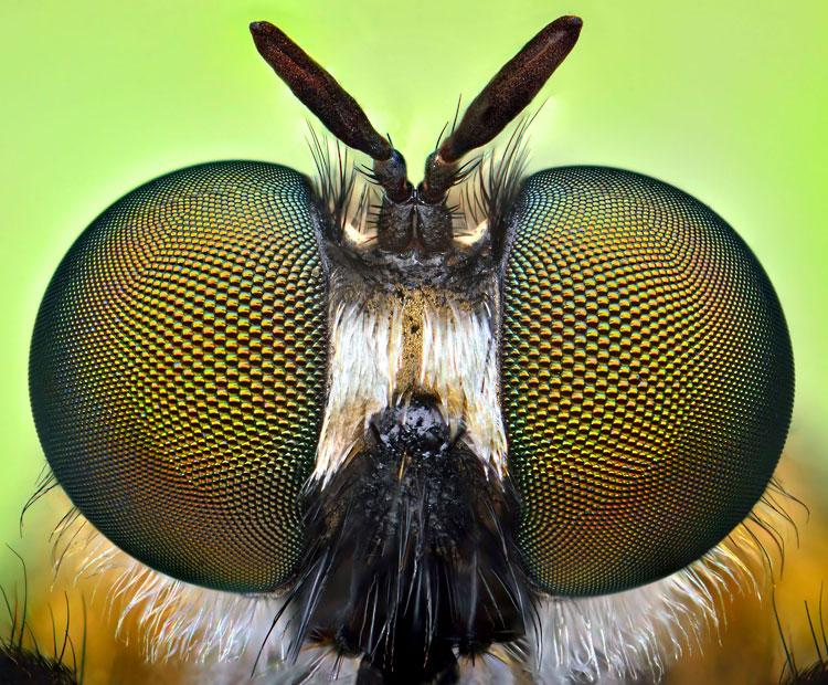 uknown-antennae_2508314k
