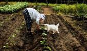 vegetable-garden_2407640k
