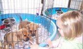 Realitatea din fabricile de câini şi pisici! Afacerea care NAȘTE MONȘTRII