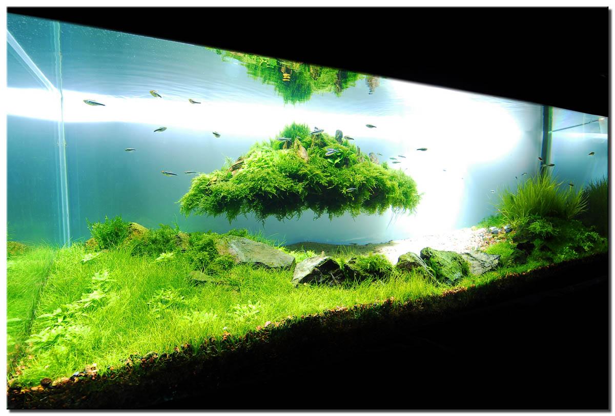 1_plantedtank_islandfull