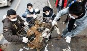 Festivalul cărnii de câine divizează populaţia chineză