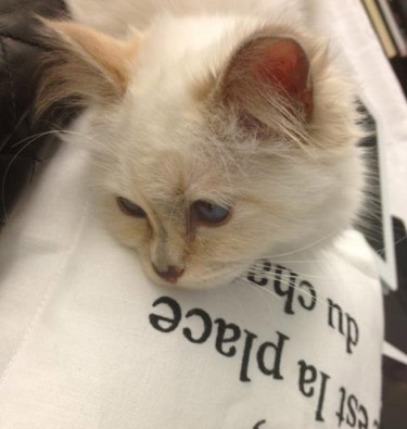 Choupette-Lagerfeld-just-chilling-0612