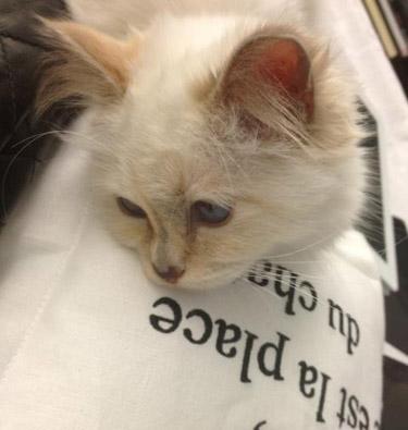 """Ce mesaj a fost postat pe pagina de socializare a lui Choupette, pisica lui Karl Lagerfeld: """"Cu o inimă odată rece…"""""""