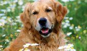 Cât bine poate face inimii un câine