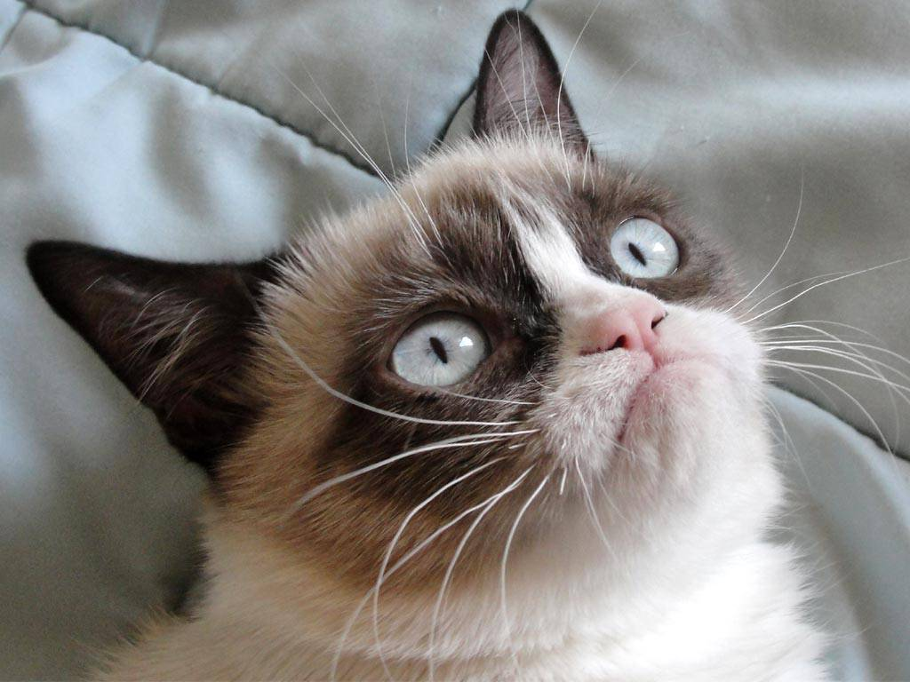 Grumpy-Cat_a721b34c1d
