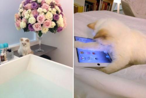 Karl-Lagerfeld-cat-Choupette-Lagerfeld-Twitter