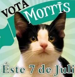 Morris-motanul-care-vrea-sa-fie-primar_256158641f