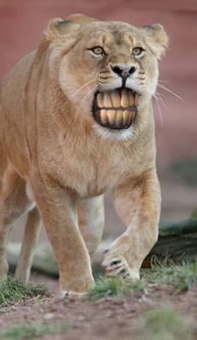 animale cu dinti (10)