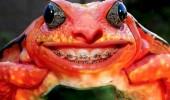 animale cu dinti (11)