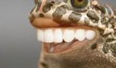 animale cu dinti (13)