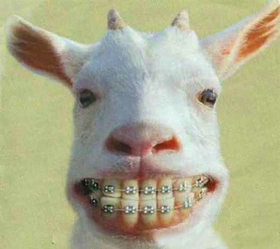 animale cu dinti (14)